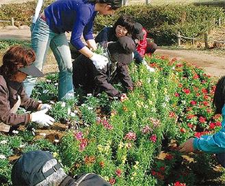 花苗で緑化活動を支援