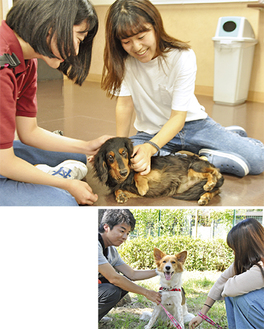 甘えん坊の保護犬ハリーと戯れる学生(上)元気で遊び好きな保護犬・むぎちゃん(下)