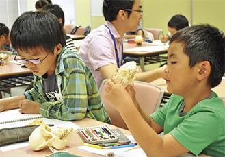 骨格標本を研究する参加児童(前回の子ども教室)