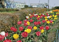 春爛漫 花々色とりどり
