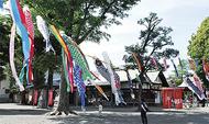 氷川神社に鯉のぼり