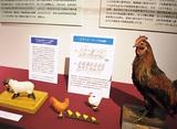 展示で学ぶ「家畜の福祉」