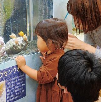 フウセンウオをジッと見つめる幼児=15日、相模川ふれあい科学館「くっつく生き物展」会場