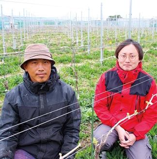 純相模原ワインの生産をめざし、市内で試験を含めて17品種の醸造ブドウを栽培する森山さん(右)と町田さん=2日、緑区田名