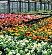 植え替えのベストシーズン到来豊富な花苗でガーデニング
