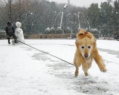 犬も喜び駆け回る