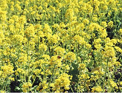 元気をくれる黄色の花