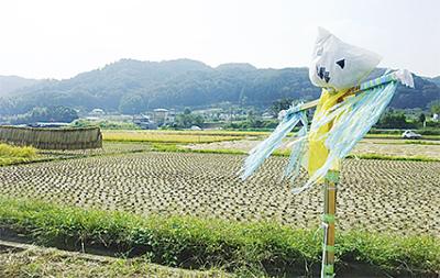 葉山島でお米づくり