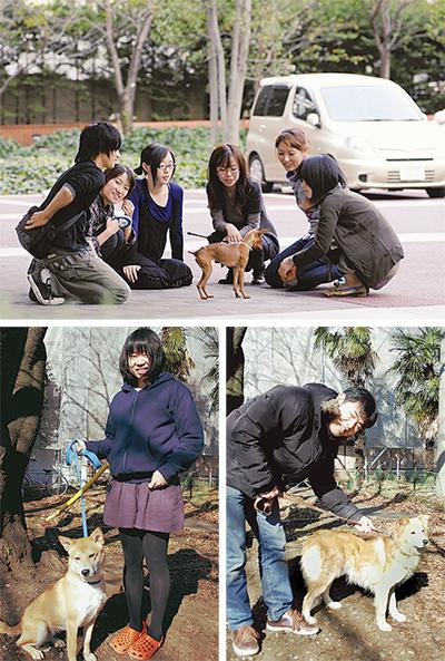 被災地の「放浪犬」を保護