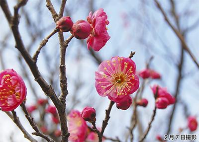 ようやく、春到来