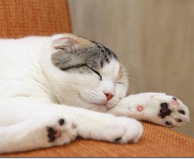 可愛い猫を家族に