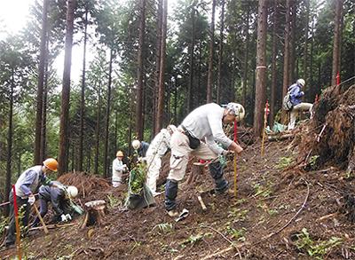 森林づくりで自然 守る