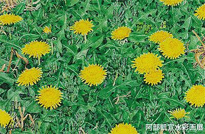 野の花のスケッチ