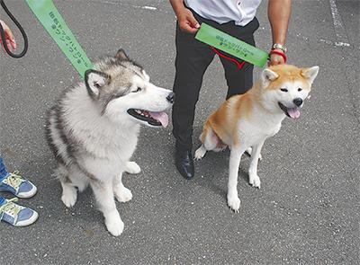 犬連れ広げる防犯の輪