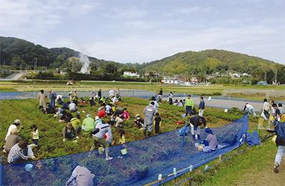 葉山島の秋を満喫