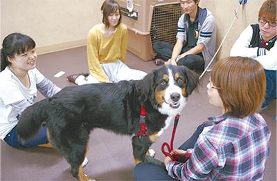 福島の「保護犬」里親募集