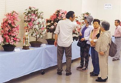花季さつき盆栽展示会
