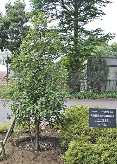 JAXA内に記念樹