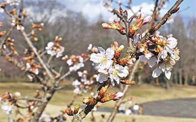 春の訪れ着々と