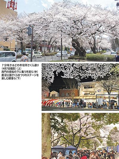 区内各所で桜の華やぎ