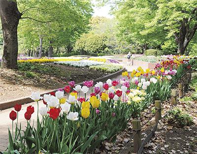 春を魅せる花々