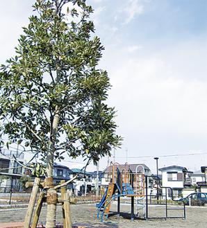 名称は、公園の真ん中に植えられたシンボルツリーのマテバシイにちなんで。秋にはどんぐりの実がなる