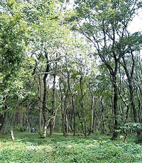 森では現在、ドングリをはじめいろいろな木々に実がなっているそう。「先日の台風で樹木が倒れたり、折れたりしています。自然のスゴサも、見て欲しいです」と同団体の高橋さん