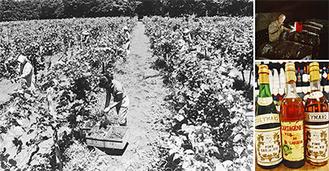 ワイナリーは1952年から2004年まで営業。剪定、刈り取り、醸造、接客など全ての業務を女性が中心となってこなしていた。閉園の理由は「創業者夫婦の他界」「従業員の高齢化」「気候の温暖化・多湿化」など。ワインは一本千円前後で販売されていた*写真提供=水澤澄江さん