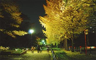 第6回大賞作品「銀杏並木のライトアップ」(須藤弘二氏/撮影)