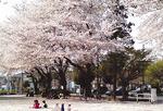会場となる松が枝公園(提供)