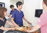 ペットの健康診断について