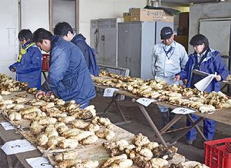 すじや切れ込み、つや、形などをもとに審査されたヤマトイモ