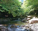 かながわの森と水を語ろう