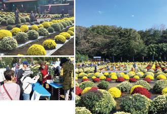 秋空に鮮やかな小花が映え、催しも多数開催される(写真は昨年)