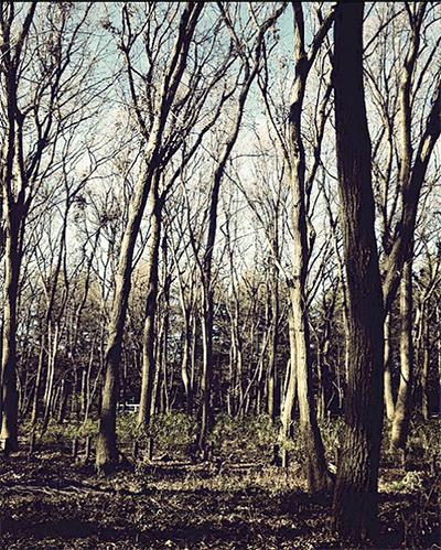 木こりを体験