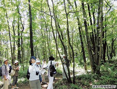 夏の森散策