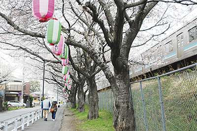 圧巻の桜並木