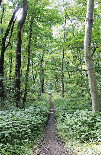 森で観察会