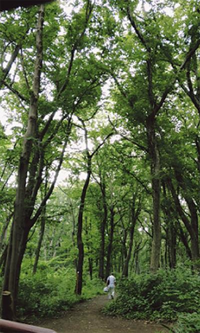 森の落葉を腐葉土に