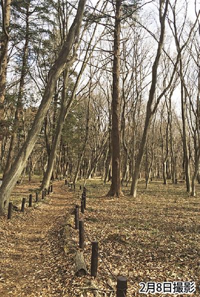 森でキコリ体験をしよう