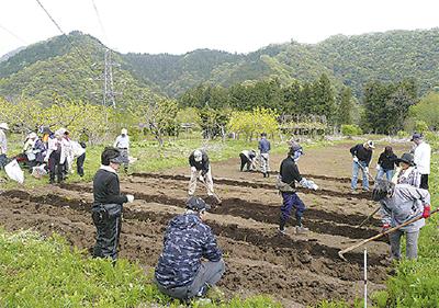 健康長寿『菊芋』作りを体験