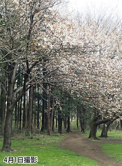 春の森を散策しよう