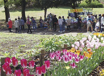 休日は春爛漫の公園で