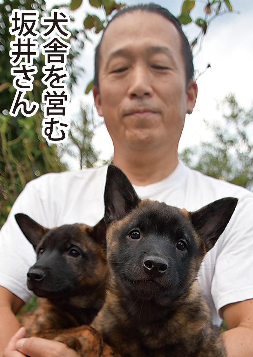 神奈川 犬 里親
