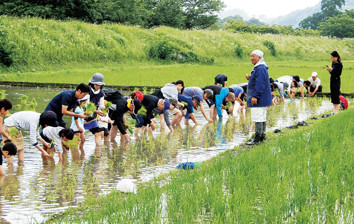 田植え〜収穫体験