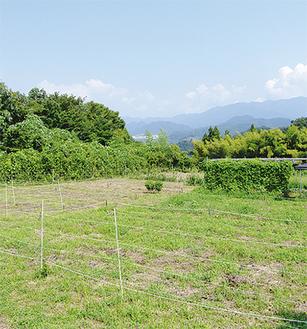 大自然に囲まれた名倉の貸農園