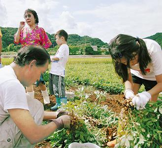 人気の落花生の収穫体験