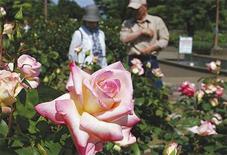 訪れた来園者らはバラの香りを楽しんだ=5月16日撮影