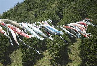 若葉萌える和田の里に泳ぐ鯉のぼり