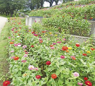 9月中旬までは色とりどりの花が楽しめる